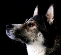 hund_03gespiegelt2klein2