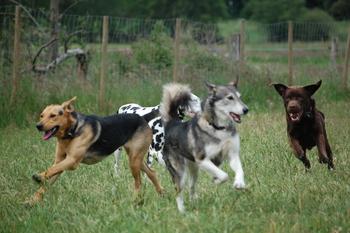 Hunde_61