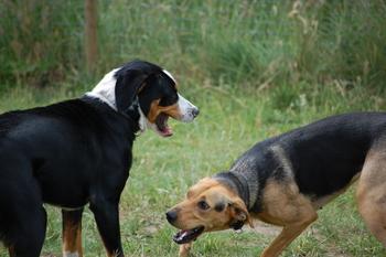 Hunde_63