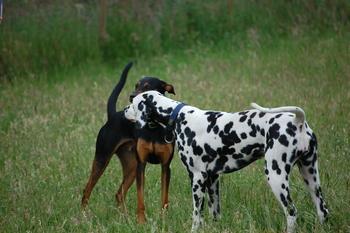Hunde_74